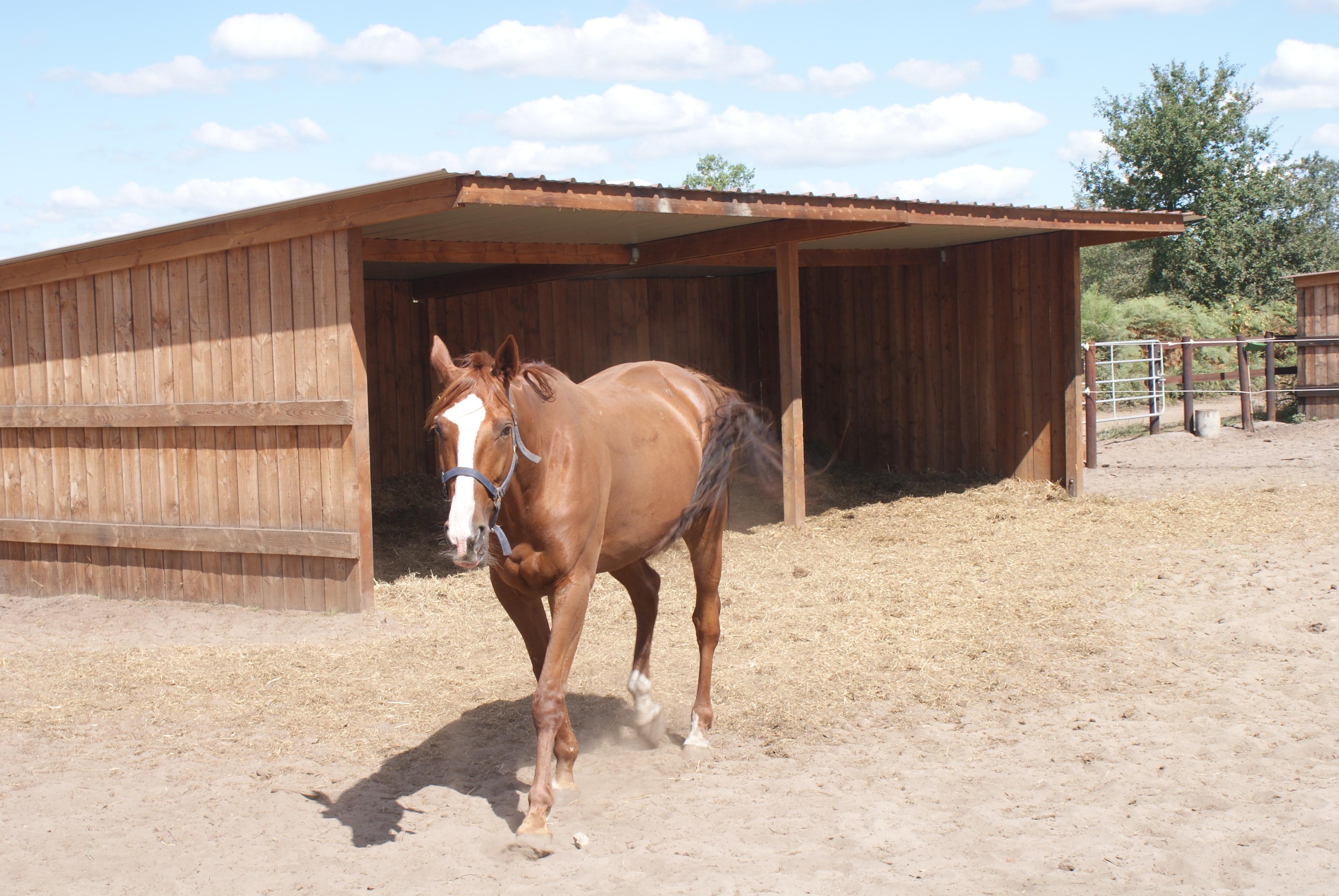 Plan Pour Construire Un Auvent En Bois construction et abris pour vos chevaux - equidagen